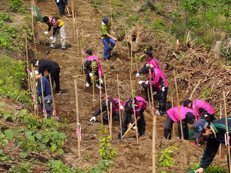 dunlop-greening-activities-in-the-kanemi-dake-of-forest20150422-2-min