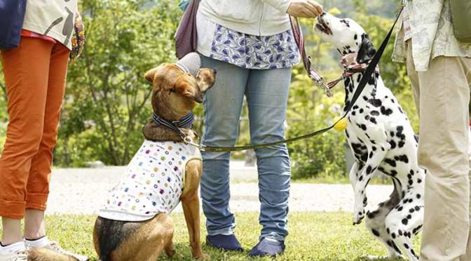 """ルノー・ジャポン、2015動物感謝デー in JAPAN """"World Veterinary Day""""に協賛"""