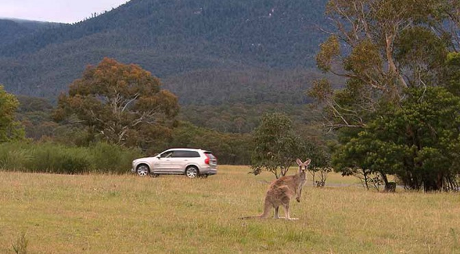 volvo-started-the-worlds-first-pair-of-kangaroo-safety-test-in-australia20151106-1
