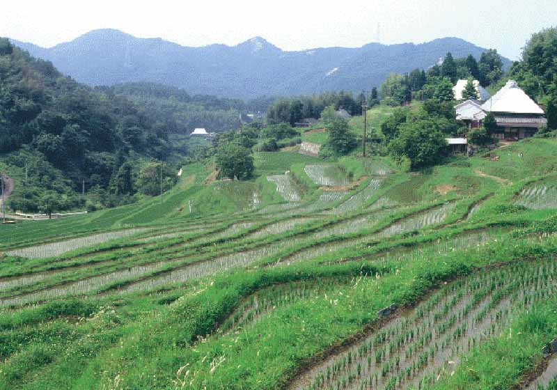 toyota-mobility-fund-japans-first-grant-business-support-the-playback-of-terraced-rice-fields-in-a-small-mobility-spread20151225-1