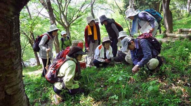 jaf-ibaraki-ibaraki-experience-yukiiri-experience-corps-spring-of-plant-observation-bird-call-making-implementation20160221-1