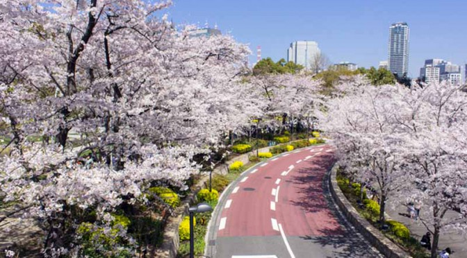 placeholder-banquet-is-obsolete-rickshaw-cherry-blossom-viewing-in-private-car-cherry-blossom-viewing-superb-style-7-election-admire-the-cherry-blossoms20160319-1