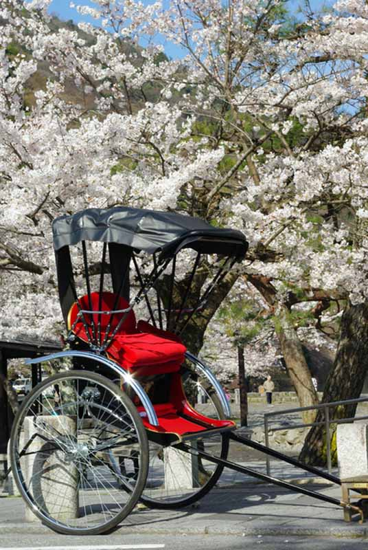 placeholder-banquet-is-obsolete-rickshaw-cherry-blossom-viewing-in-private-car-cherry-blossom-viewing-superb-style-7-election-admire-the-cherry-blossoms20160319-7