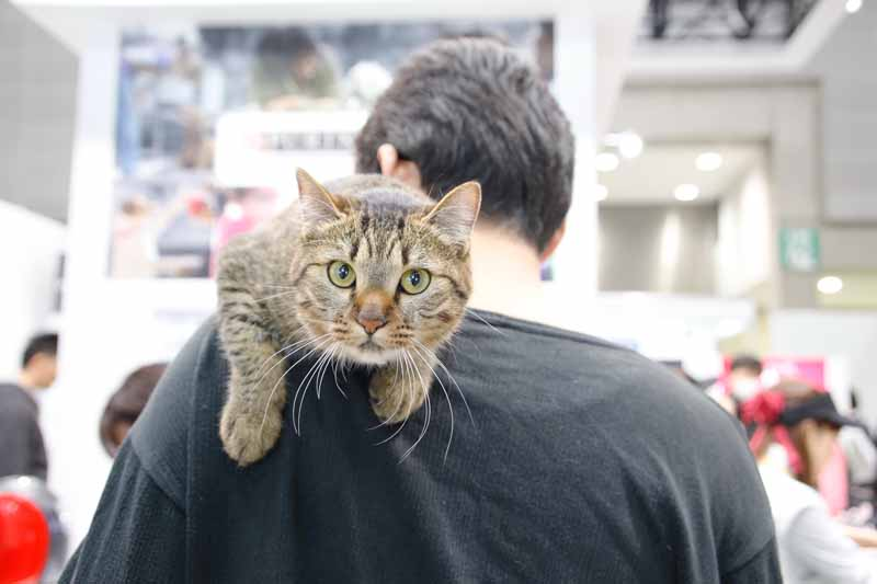 vgj-6th-rich-living-fair-inter-pet-people-and-pets-exhibition20160301-2