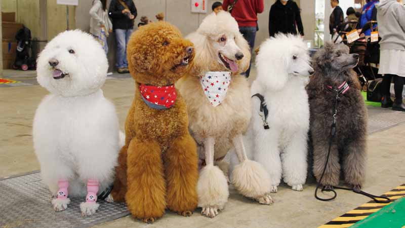 vgj-6th-rich-living-fair-inter-pet-people-and-pets-exhibition20160301-6