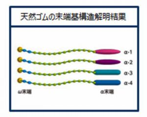 sumitomo-rubber-industries-announced-the-research-results-to-analyze-the-end-group-structure-of-natural-rubber20161027-4